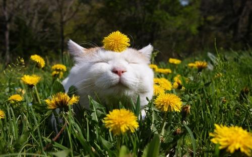 happy-cat-in-the-garden